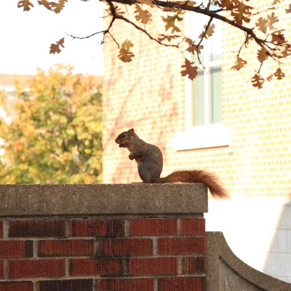 You'd have to be nuts not to live on the Mizzou campus.